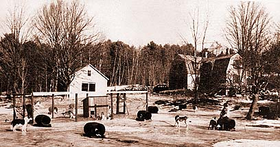Cold River Kennels in North Sandwich NH